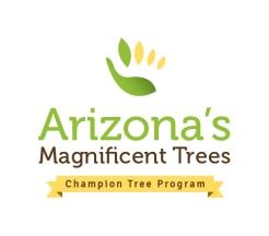 champion-tree