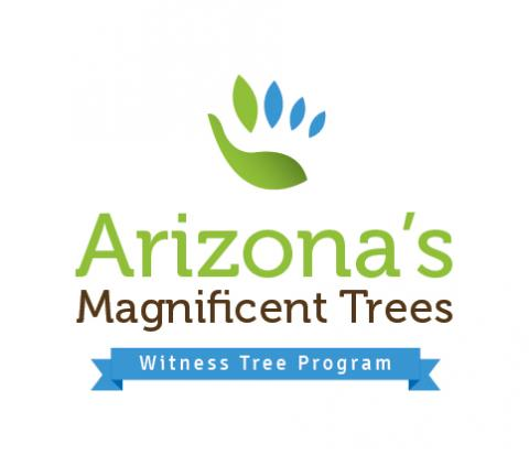 witness-tree